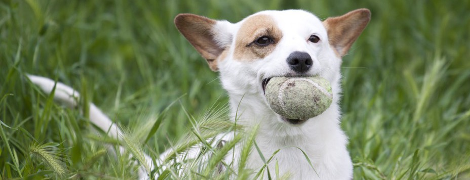 Pet Sitting At Home Pet Care The Best Place For Pets