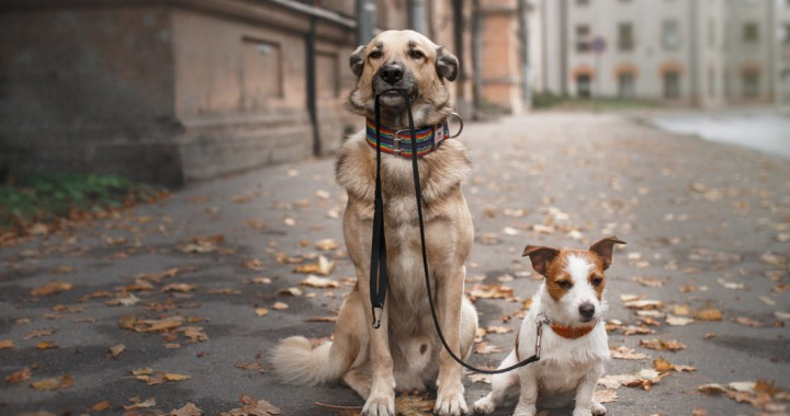 Dogs Wanting Walked